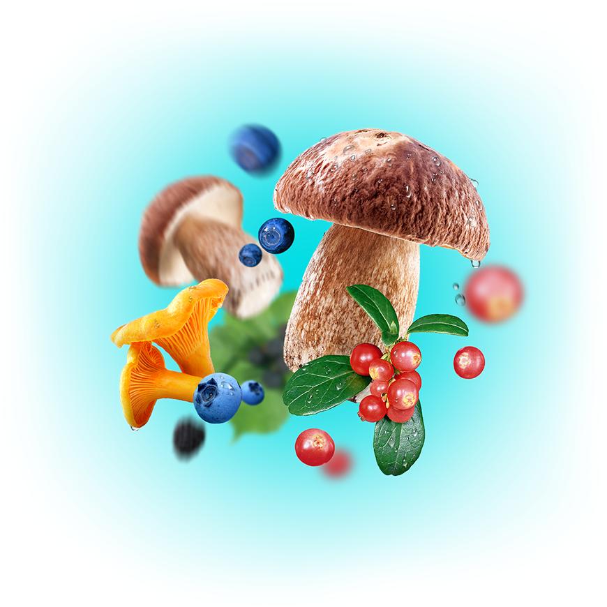 Semiozere | Грибы и ягоды